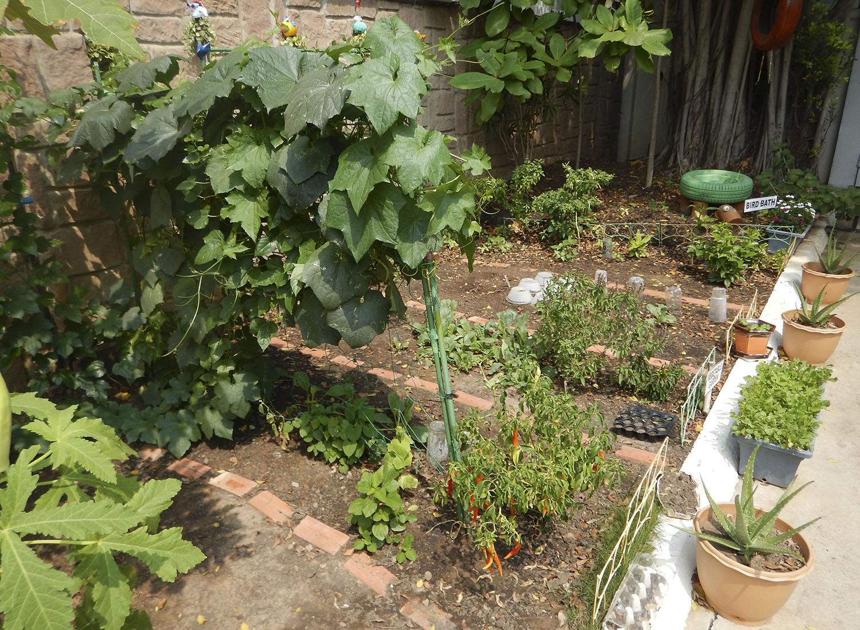 GardenDSCN2983.jpg